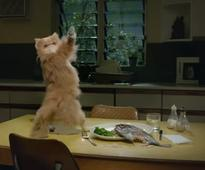 BBDO N.Y. and Mountain Dew Invite All Animals to Join the Twerking Train