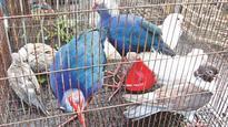 Selling birds rampant at Sylhet fair