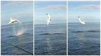 Fishermen off coast of Florida spot mako shark doing flips through the air
