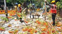 Bombay High Court refuses to stay felling of South Mumbai trees for metro project
