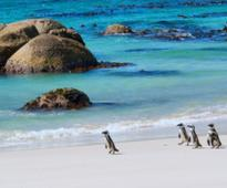 Australia to Cape Town, South Africa from just AU$820!