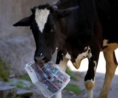 Indulge in cow smuggling and you'll be killed: Raj BJP MLA