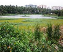 Can citizens salvage the fortunes of a lake?