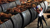Palm oil stockpiles rise in Malaysia