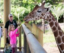 Parents Magazine Names San Antonio Zoo One of the Top Kid-Friendly...