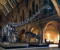 Dippy paves the way for Wexford blue whale