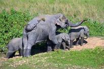 Kaziranga buffalo deaths not caused by anthrax: Test report