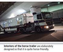 Living on horse sense
