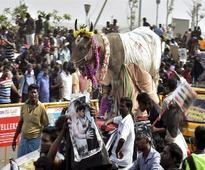 2 dead, 129 injured during jallikattu event in TN
