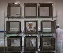 Inside the 'mosquito factory' aiming to eliminate Zika