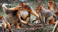 SC to hear plea against declaring Nilgai, monkeys as vermins