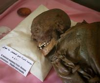 Yemen war threatens millennia-old mummies, lack of supplies, electricity may trigger decay