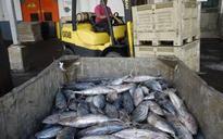 American Samoa plant to shut over fish shortage
