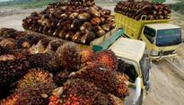 The Future Still Gloomy for Palm Oil Business