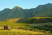 California winemaker scores with South African wine