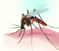 Dengue stings city, children worst hit