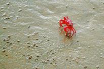 Weekend vacations: Sea, tide & crabs