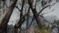 Hazard-reduction burns blanket Sydney in smoke