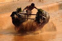 Amid Jallikattu row, Karnataka CM seeks Centre's favourable stand on buffalo race