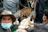 Close all tiger farms, WWF tells Asian states (AFP)