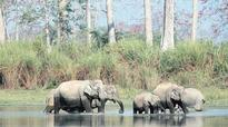 Jumbo diplomacy: Fenced out by Nepal, elephants present Bengal with a headache
