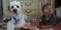 Mali the dog gives wee Frankie the breath of life