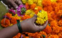 How an Android app saved the crucial marigold harvest for this Indian company