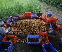 Deregulation of produce market from APMC is bound to fail, thanks to haphazard arrangements