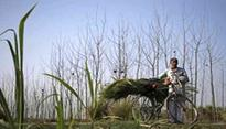 Another farmer commits suicide in MP's Mandsaur
