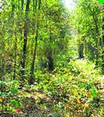Content uploaded not forest draft policy, clarifies ministry