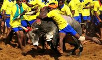 Jallikattu Ordinance cleared by Law Ministry, likely to be issued today