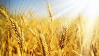 FAO: Global prices of key staple food commodities rose in April