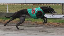 Dyna Vikkers tough to beat in Wellington Cup
