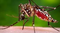 'Mosquito-geddon' averted as skeeter population plunges by up to 75% in Calgary