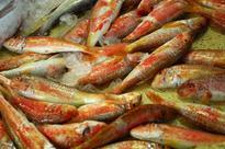Adopt ornamental fish for more income, smallholder farmers told