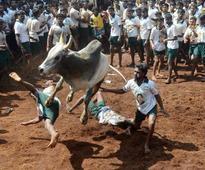TN making efforts to resume Jallikattu: Minister