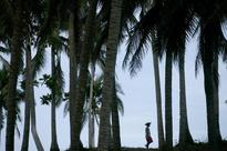 Wrong to classify coconut as palm: Parliament panel
