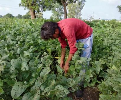 Maharashtra produces variety of crops, yet its farmers are starving