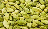 Kerala farmers panic due to fall in cardamom prices