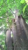 Marathi youth climbs tree, threatens suicide