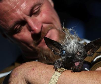 Meet Sweepee Rambo -- the world's ugliest dog