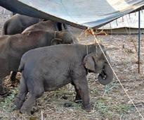 NGO rescues elephants, other animals from circus