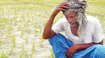 Karnataka: Holistic approach can save farmers from the noose