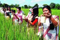 Kati Bihu holiday tomorrow