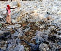 NGT bans use of plastic bags of less than 50 microns in Delhi; violation will attract Rs 5,000 fine