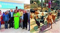 Woman of steel has room for 1,000 dogs in posh Chhatarpur farmhouse