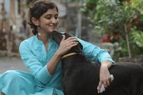 The long-distance animal healer