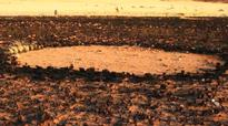 Study finds origin of 'fairy circles' in the desert Read Full Article
