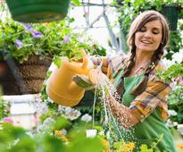 Tips To Protect Your Garden This Summer