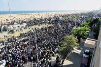 Tamil Nadu CM O Pannerselvam set to lob Jallikattu ban ball in PM Narendra Modi court